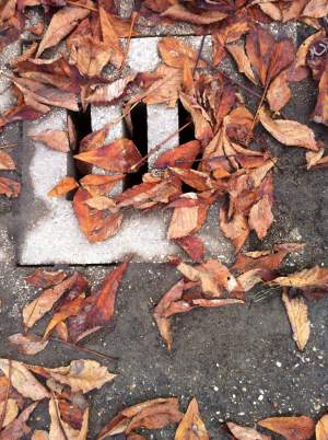 Leaves on a drain